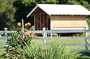 Photo by Mara Lavitt <br /> September 18, 2015 <br /> White Gate Farm, East Lyme.