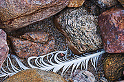 Gull feather on rocks on shore of Georgian Bay<br />