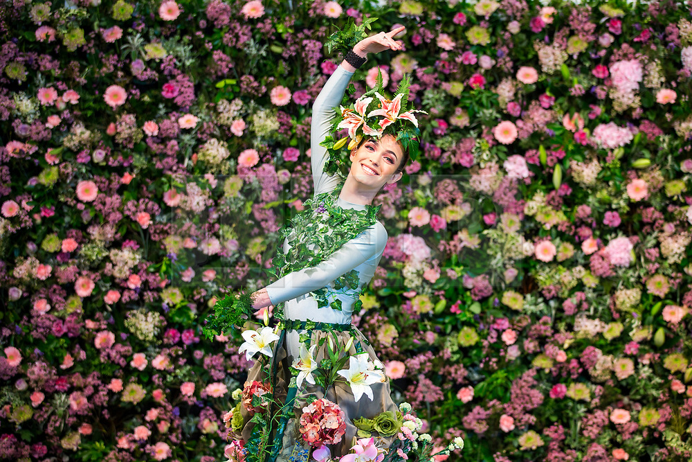 © Licensed to London News Pictures. 25/04/2018. Harrogate UK. Dancer Alison Parsons wears a flower dress in front of the flower wall in the Green House display at this years Harrogate Flower Show in which starts tomorrow.  The GREENhouse has been designed to blur the lines between house and garden, creating a home infused with nature complete with living wallpaper,cascading flower shower, an aromatic bed of herbs and even a vege-table. Photo credit: Andrew McCaren/LNP