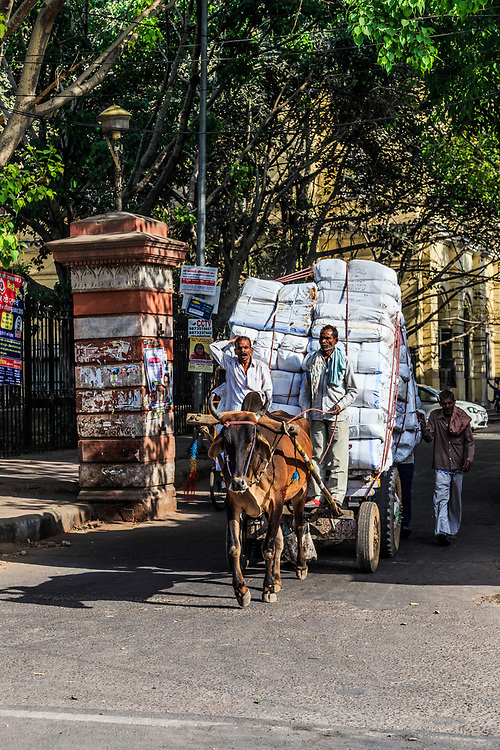 A cow pulling a heavy load in Old Town in New Delhi, India.