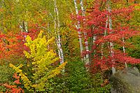 Colorful foliage in Groton State Forest, Vermont