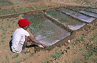 Inde. Rajasthan. Agriculteur dans la region de Bijolia. // India. Rajasthan. Farmer around Bijolia.