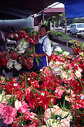 Anthuriums, Hilo open market, Island of Hawaii, (editorial use only, no model release)<br />