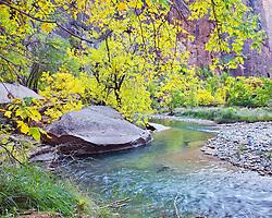 Virgin River, Fall Colors, Zion National Park