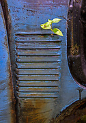 Rusted car are seen at Old Car City, Tuesday, May 28, 2019, in White, Georgia. (Wade Payne/www.wadepaynephoto.com)