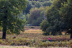 © Licensed to London News Pictures. 05/10/2020. London, UK. A cyclist enjoys the mild temperatures and autumnal colours in Richmond Park today after Storm Alex lashed the UK with 3 days of rain. Weather forecasters predict sunshine and showers with a high of 16c for the rest of the week. Photo credit: Alex Lentati/LNP