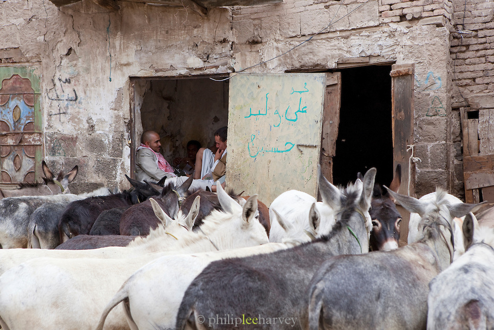 Local men with their donkies. The men chew Khat, a plant with a stimulant effect. Sana'a, Yemen