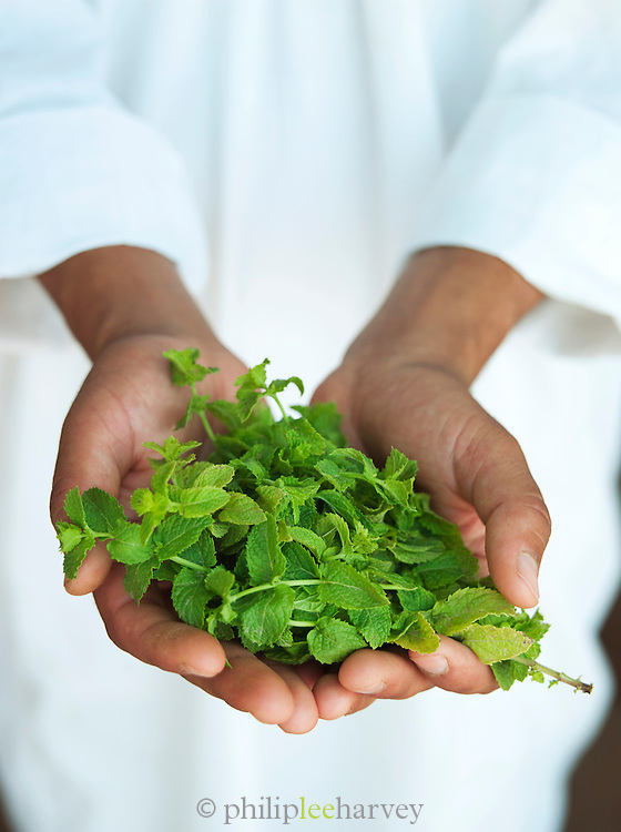 A man holds a handful of fresh mint used for tea in the Skoura Oasis in Morocco