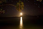 Full moon with stars  Coconut Palm tree Taveuni, Fiji
