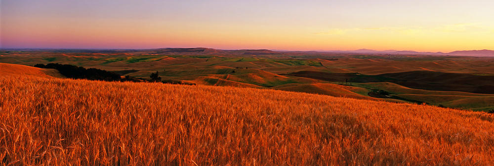 Panorama image of wheatfields in the Palouse, eastern Washington, Pacific Northwest by Randy Wells