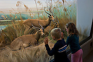 Kids looking at animals in the African Hall exhibit, California Academy of Sciences, Golden Gate Park, San Francisco, California