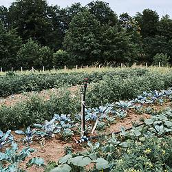 """A vegetable garden, """"le potager de Frugie"""". Saint-Pierre-de-Frugie, France. July 12, 2019."""