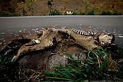 04 de Setembro de 2007.<br /> <br /> Projeto Beira de Estrada.<br /> <br /> Rota Vale do Rio Doce<br /> <br /> Foto: Leo Drumond / Agencia Nitro