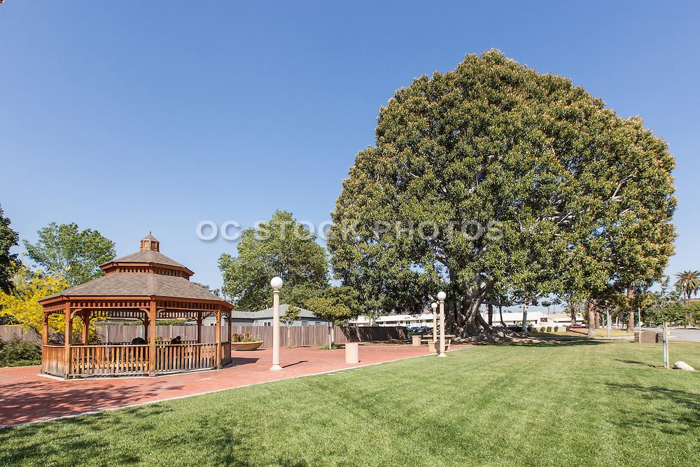 Big Tree Park in Glendora California