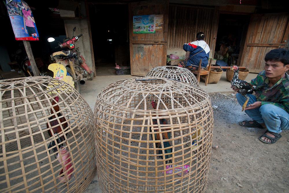 A young man pets his cock behind the Phousy public market in Ban Saylom Village, just south of Luang Prabang, Laos.