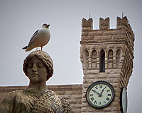 Yellow-legged Gull on a Statue. Image taken with a Leica D-Lux 6 camera.