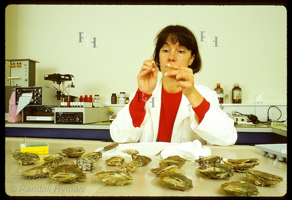 Biologist Dominique Chagot of IFREMER places heart tissue from Bonamia-infected oyster on slide France
