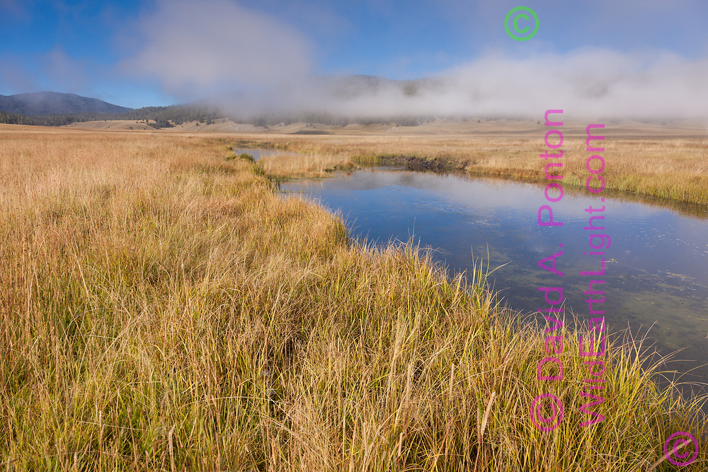 Tall autumn grass along the East Fork of the Jemez River, with fog lifting from the Valle Grande, largest caldera in Valles Caldera National Preserve, © David A. Ponton