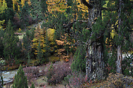 """Autumn colours and sceneries of the wilderness in the UNESCO World Heritage Site """"Three Parallel Rivers"""" Baima Snow Mountain Nature reserve, Yunnan, China"""