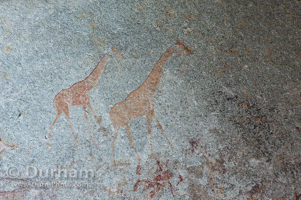 Girffes and human figures depicted in San bushman rock paintings, estimated at around 2000 years old, in Nswatugi Cave in Matobo National Park, Zimbabwe.