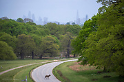 Fea0094989 . Daily Telegraph <br /> <br /> DT News<br /> <br /> Deer in Richmond Park early on Easter Monday morning .<br /> <br /> London 13 April 2020