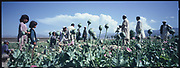 Children and villagers stand amid the poppy field, Jalalabad.