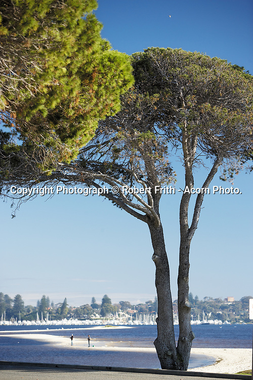 Point Walter pine tree, looking toward Point Walter Spit and Royal Freshwater Bay Yacht Club Perth Region