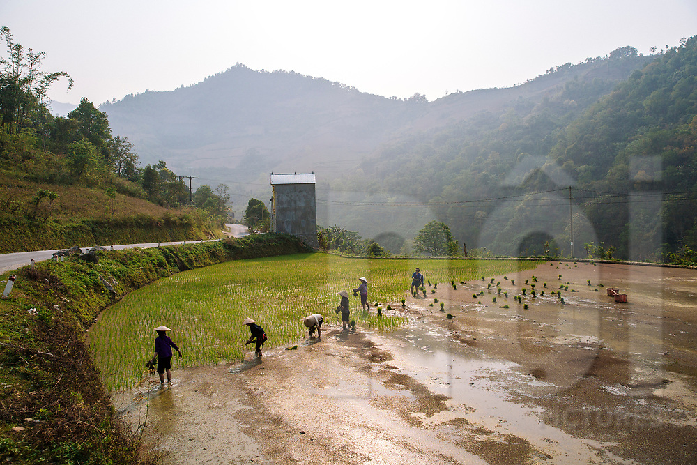 Group of Vietnamese farmers plant rice in a field, Cao Bang Province, Vietnam, Southeast Asia