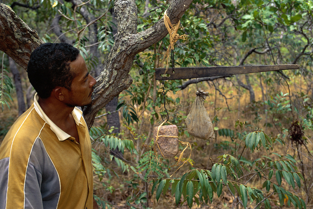 Rocks used by Brown Capuchin Monkeys to crack palm nuts <br /> Cebus apella<br /> Piaui State,  Cerrado Habitat<br /> BRAZIL.  South America