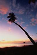 Palm on Beach At Sunset