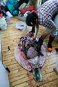 Seal hunter Emil Madsen's wife Erika cleans a seal shot by her husband at their home in Cap Hope, Greenland. (Emil Madsen is featured in the book What I Eat: Around the World in 80 Diets.) After cleaning, she will cook the best meat for her family, feed the remains to the sled dogs, then dry and sell the sealskin. Seal meat continues to be an important source of meat for some Greenlanders, but for many, Danish food has replaced it in the native diet.