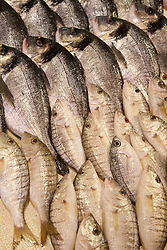 Middle East, Israel, Akko, rows of fresh fish in market