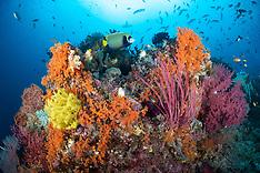 Indonesia Reef Scenics