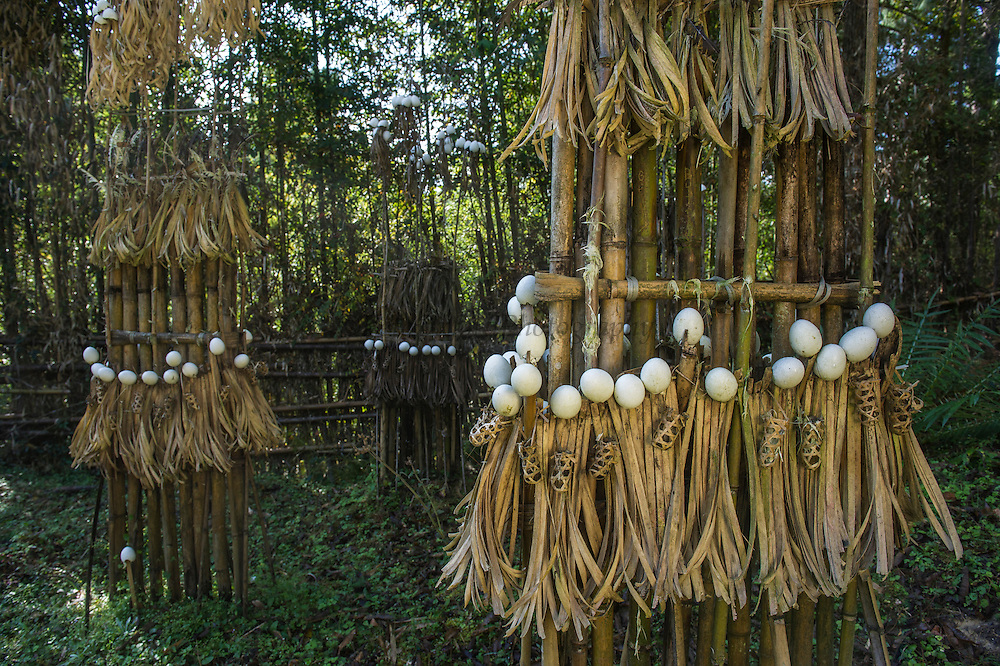 Apatani sacrificial area. Either for ceremonies or done by shaman when someone is household is sick<br /> Apatani Tribe<br /> Ziro Valley, Lower Subansiri District, Arunachal Pradesh<br /> North East India