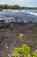 Punaluu Black Sand Beach is one the most famous black sand beaches in Hawaii.  Located on the Kau coast,  between Hawaii Volcano National Park and the  town of Naalehu. Often visited by large green sea turtles basking on the beach.  Swimming isn't ideal here but it is a unique experience to feel black course volcanic sand between your toes, and commune with the turtles.