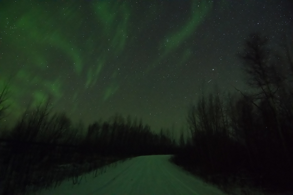 The Aurora Borealis begins above a snow covered dirt road in Nenana, Alaska