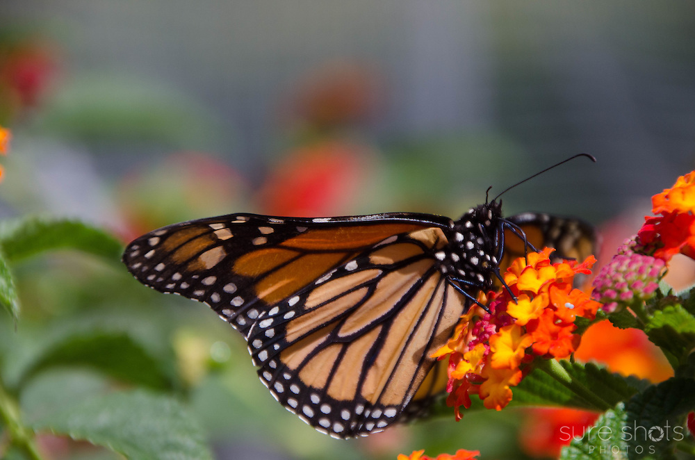 Van Dusen Botanical Gardens, Vancouver, BC