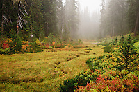 a meandering intermittent stream courses through a meadow while cool fog fills the air in the Indian Heaven Wilderness of the Gifford Pinchot National Forest, Washington state, USA.
