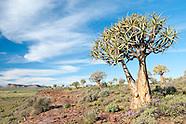 Succulent Karoo