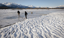 Steve Lewis, Raptor Management Coordinator, U.S. Fish & Wildlife Service (left), and Rachel Wheat, a graduate student at the University of California Santa Cruz, cross the partially frozen Chilkat River to remove the traps they set to catch bald eagles. The countless footsteps in the snow are testament to their pre-sunrise trips onto the gravel bar to set the traps under the cover of darkness and the late afternoon removal of the traps each day. Wheat is conducting a bald eagle migration study of eagles that visit the Chilkat River for her doctoral dissertation. She hopes to learn how closely eagles track salmon availability across time and space. The bald eagles are being tracked using solar-powered GPS satellite transmitters (also known as a PTT - platform transmitter terminal) that attach to the backs of the eagles using a lightweight harness. During late fall, bald eagles congregate along the Chilkat River to feed on salmon. This gathering of bald eagles in the Alaska Chilkat Bald Eagle Preserve is believed to be one of the largest gatherings of bald eagles in the world.