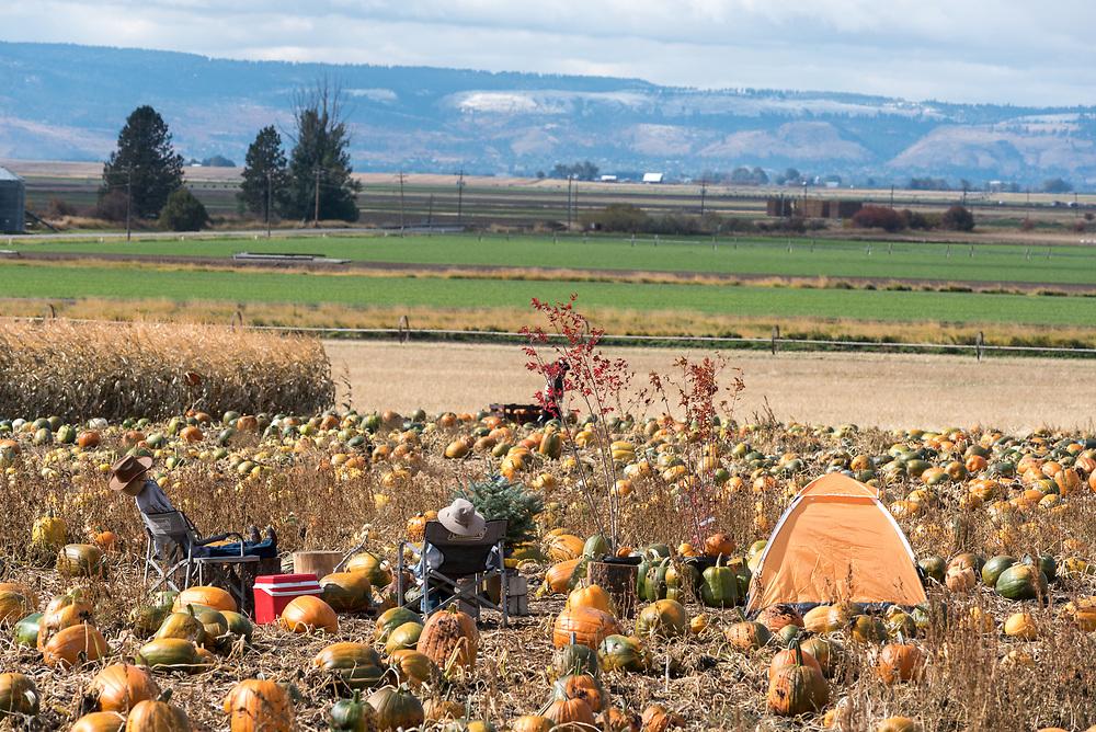 You-pick pumpkin patch in Oregon's Grande Ronde River Valley.