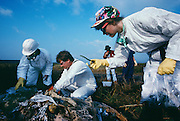 Collecting samples in the Fresh Kills Landfill. 1992 NY<br /> Fresh Kills Landfill in Staten Island.