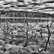Limited edition photograph of partially submerged branches in the Yellowstone River.