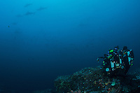 """Scalloped Hammerhead Sharks schooling near the top of a submerged seamount, in order to be """"cleaned"""" by Angelfishes and Barberfishes.  Two divers using rebreathers observe and try to capture the scene.<br /> <br /> <br /> Shot at Cocos Island, Costa Rica"""