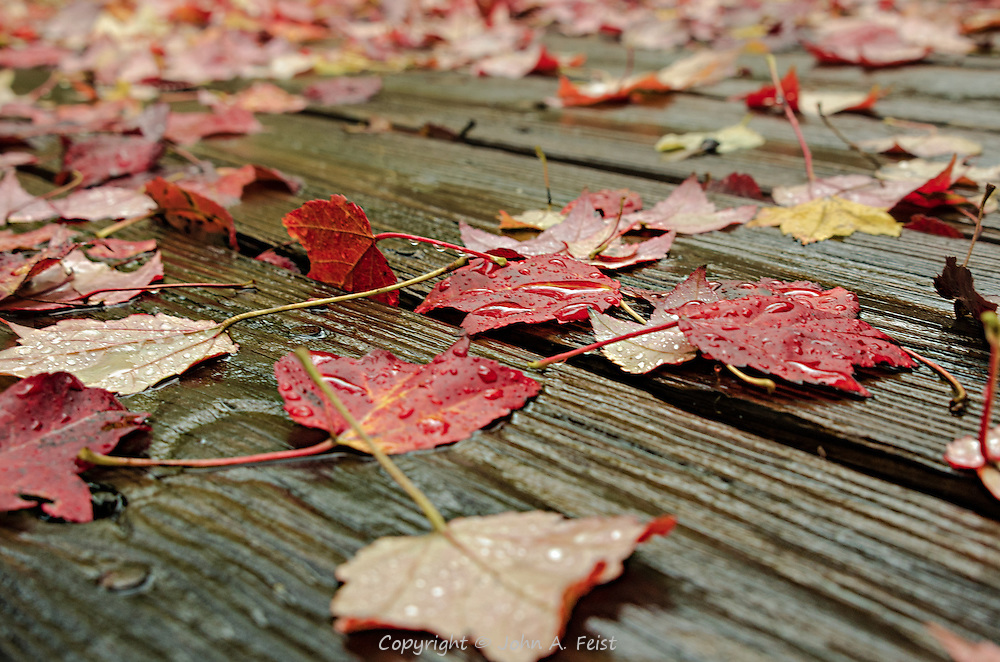 It was one of those cold, wet and dreary days in late autumn.  The rain and wind had blown some bright colored leaves down.