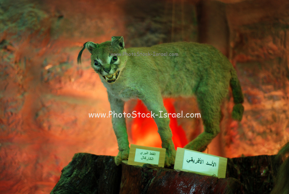 Qalqilya Zoo is a small 2-hectare (4.9 acres) zoo in the Palestinian city of Qalqilya on the western edge of the West Bank.Established in 1986, it is the only municipal zoo in the Palestinian territories. The zoo houses 170 animals, a Natural History Museum, a children's entertainment park, and an on-site restaurant.