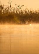 Men in canoe at sunrise on lower Zambezi River in Zambia