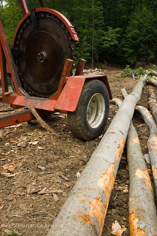 Beech logs in Eden, Vermont.  Green Mountains.