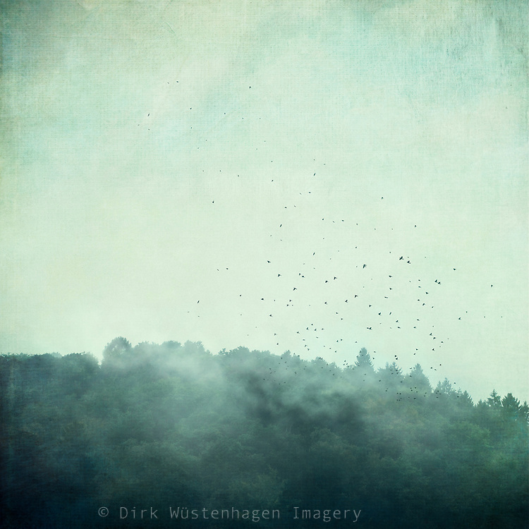 Forest hill with rising fog and a flock of birds