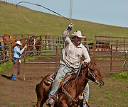 Snelling, California March 05, 2011.Erickson Cattle Company Prey Ranch: Branding spring calfs and getting Cattle ready for 2008 spring cattle drive.. Photo by AL GOLUB/Golub Photography